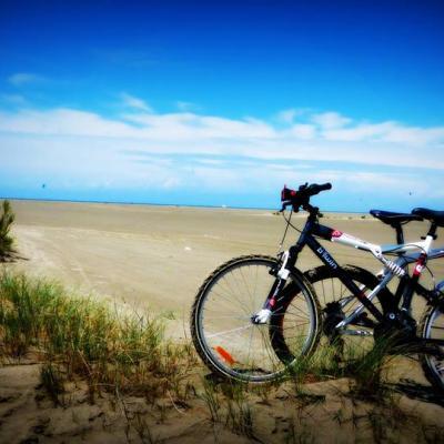 BEAUDUC  à vélos 1 véloc arles location